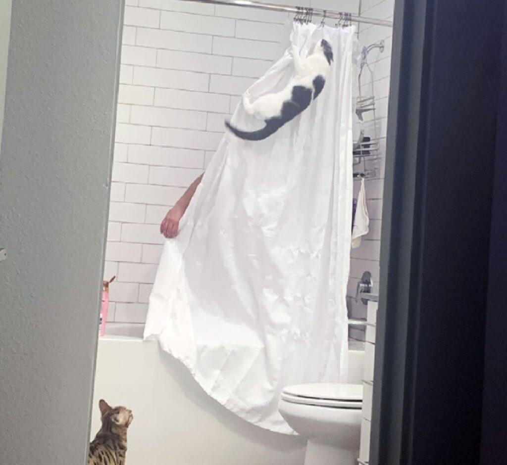 gatti assalto proprietario bagno