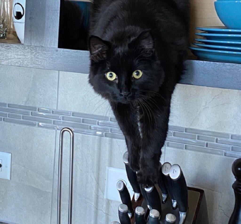 gatto afferra coltelli