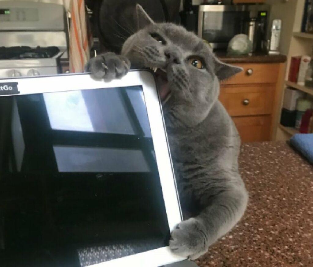 gatto morde computer