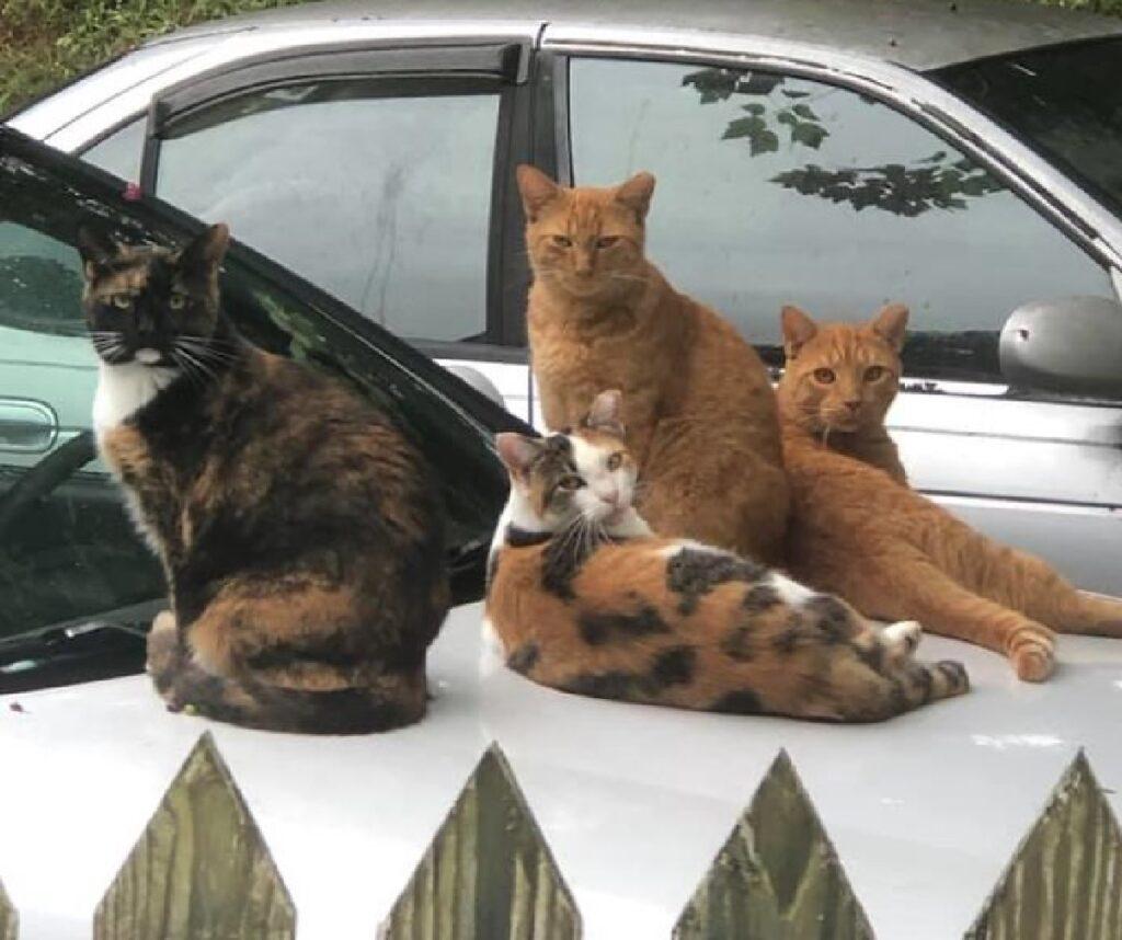 gatti sul cofano auto