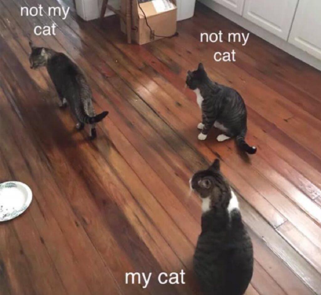 gatti che entrano in casa non loro