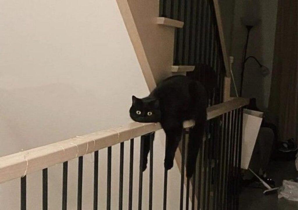 gatto nero ringhiera