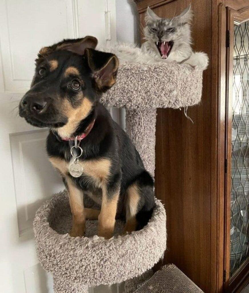 cane nel tiragraffi