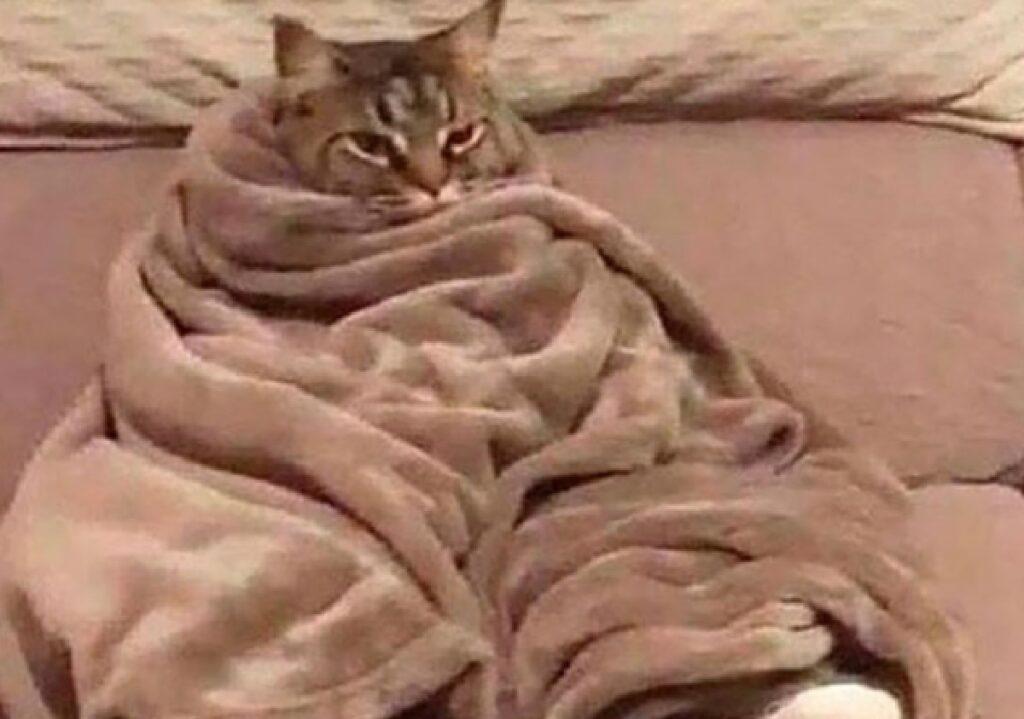 gatto immerso coperte