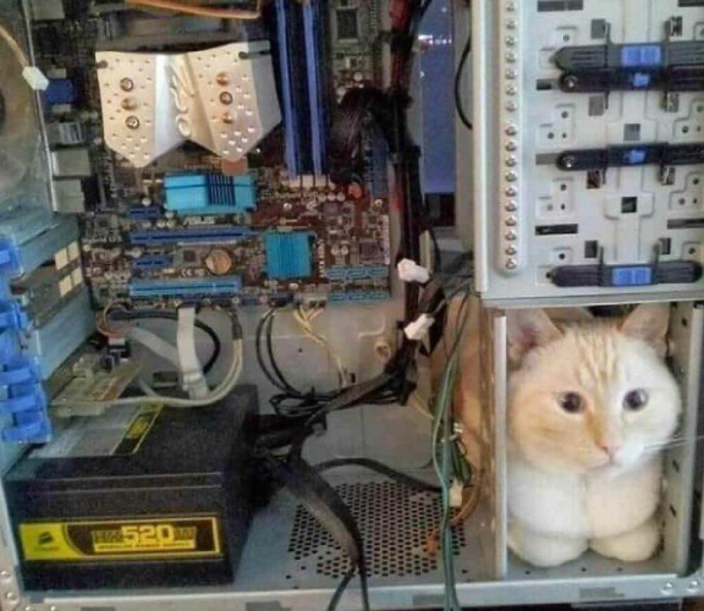 gattino rosso computer cip