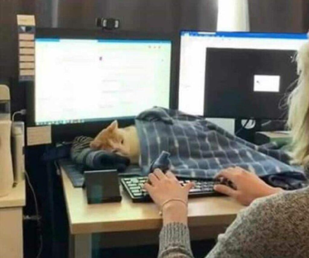 mamma scrive al computer gatto