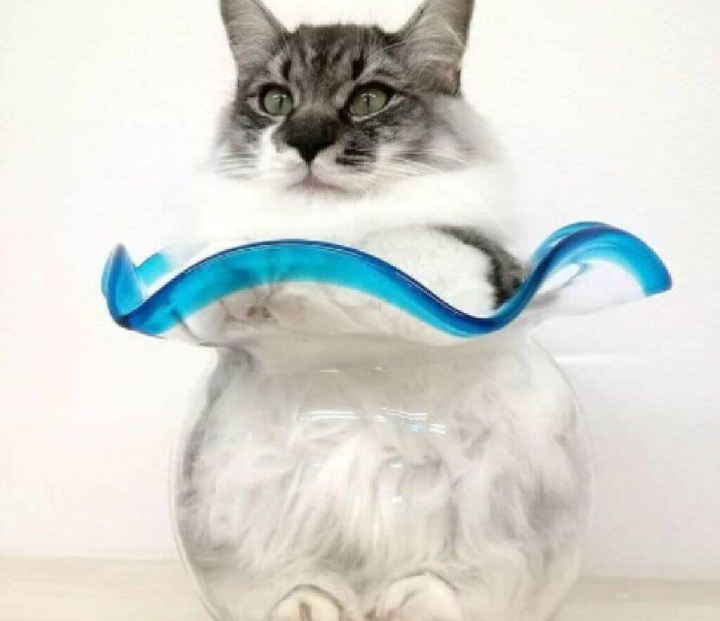 gatto bianco si intrufola dentro vaso