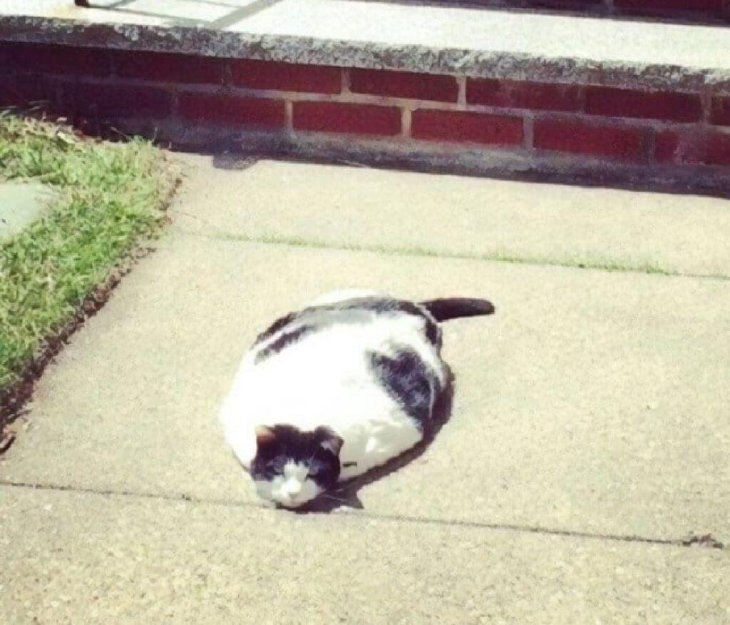 gatto sembra sciogliersi