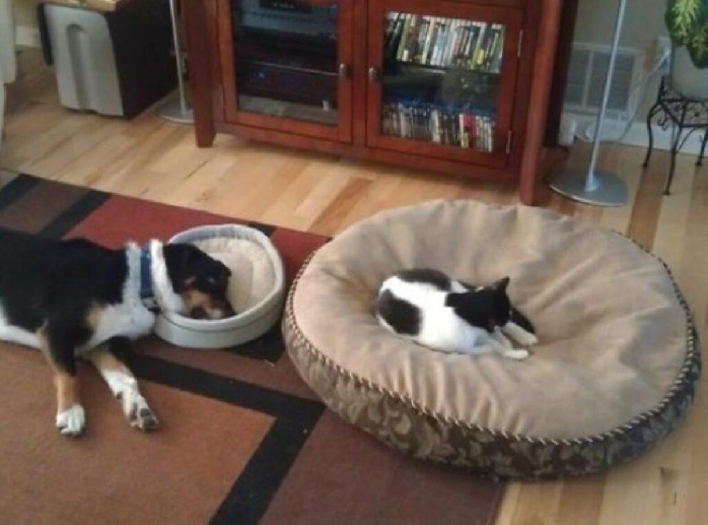 gatto lascia poco spazio cane