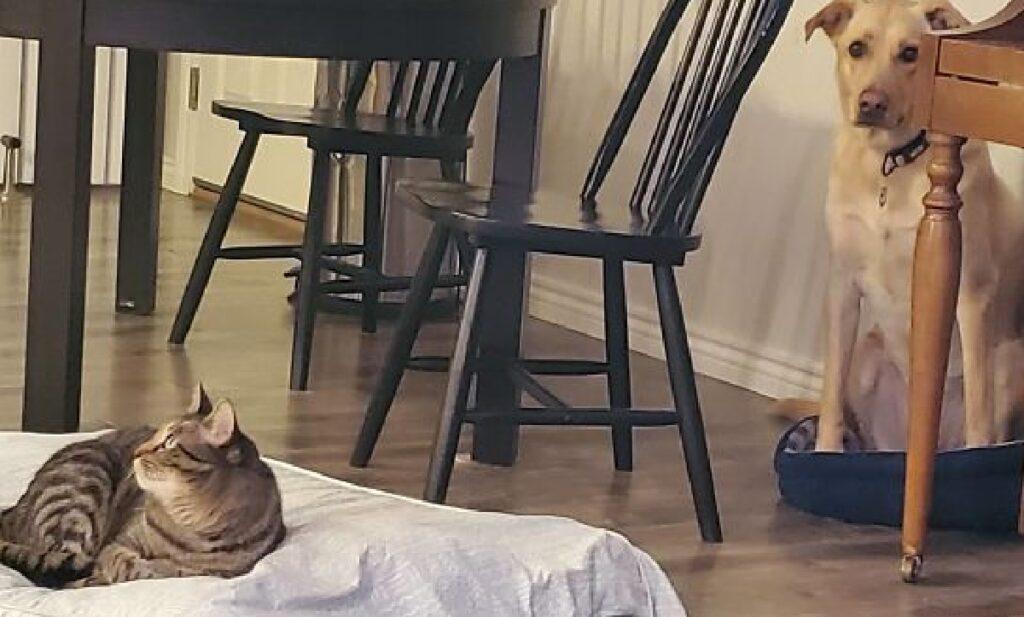 gatto mette cane angolo