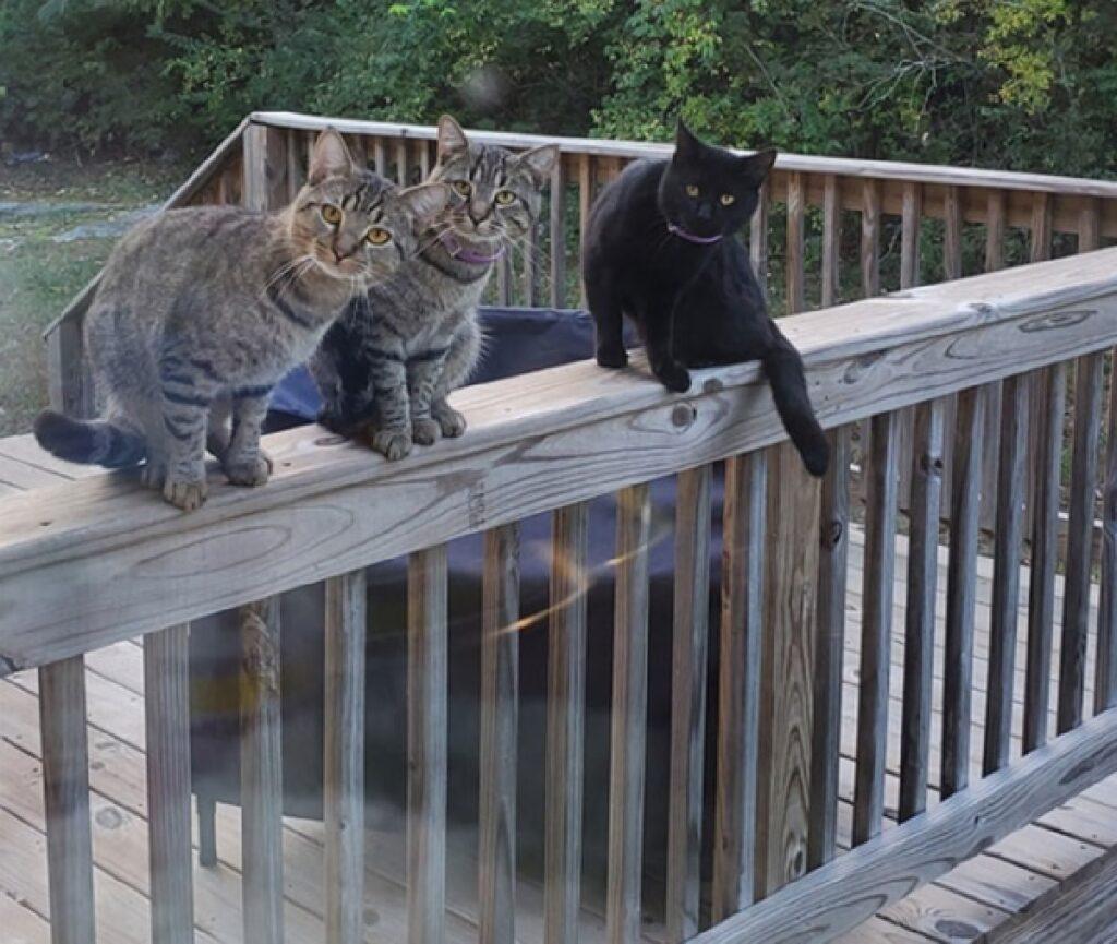 gatti osservano attraverso finestra