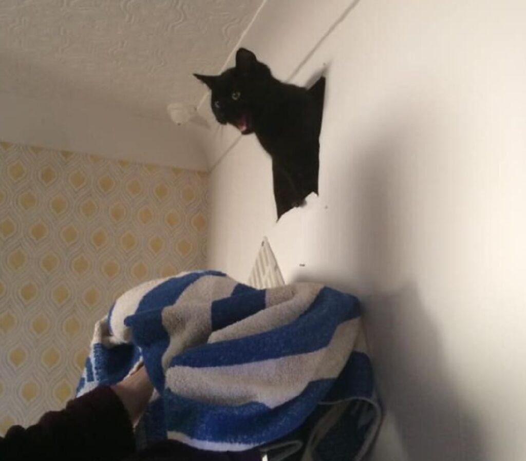 gattino nero esce dal muro