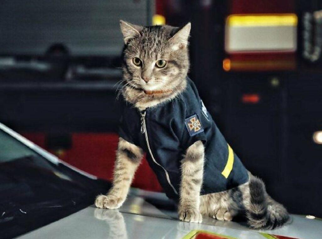 gatto lavora in officina
