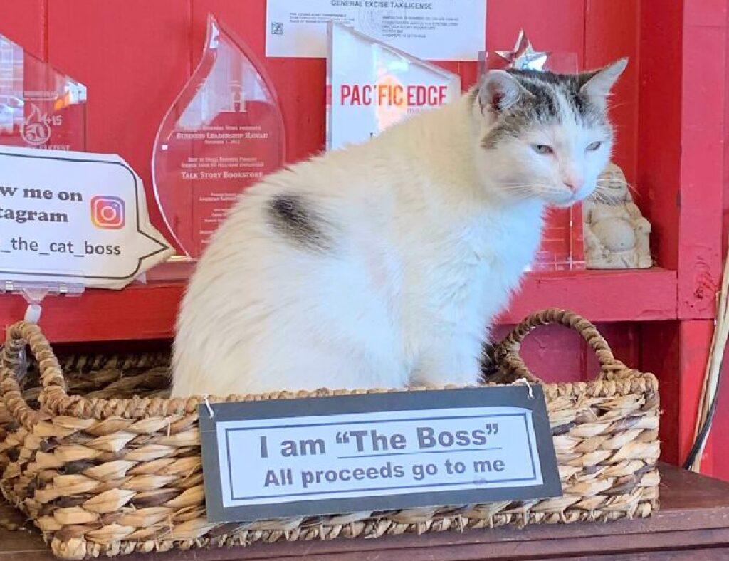 gatto capo di un'azienda