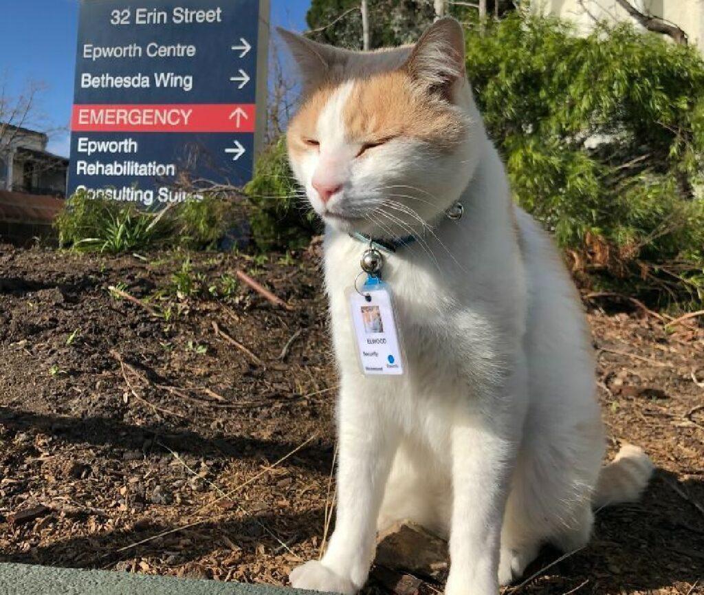 gatto addetto ospedale