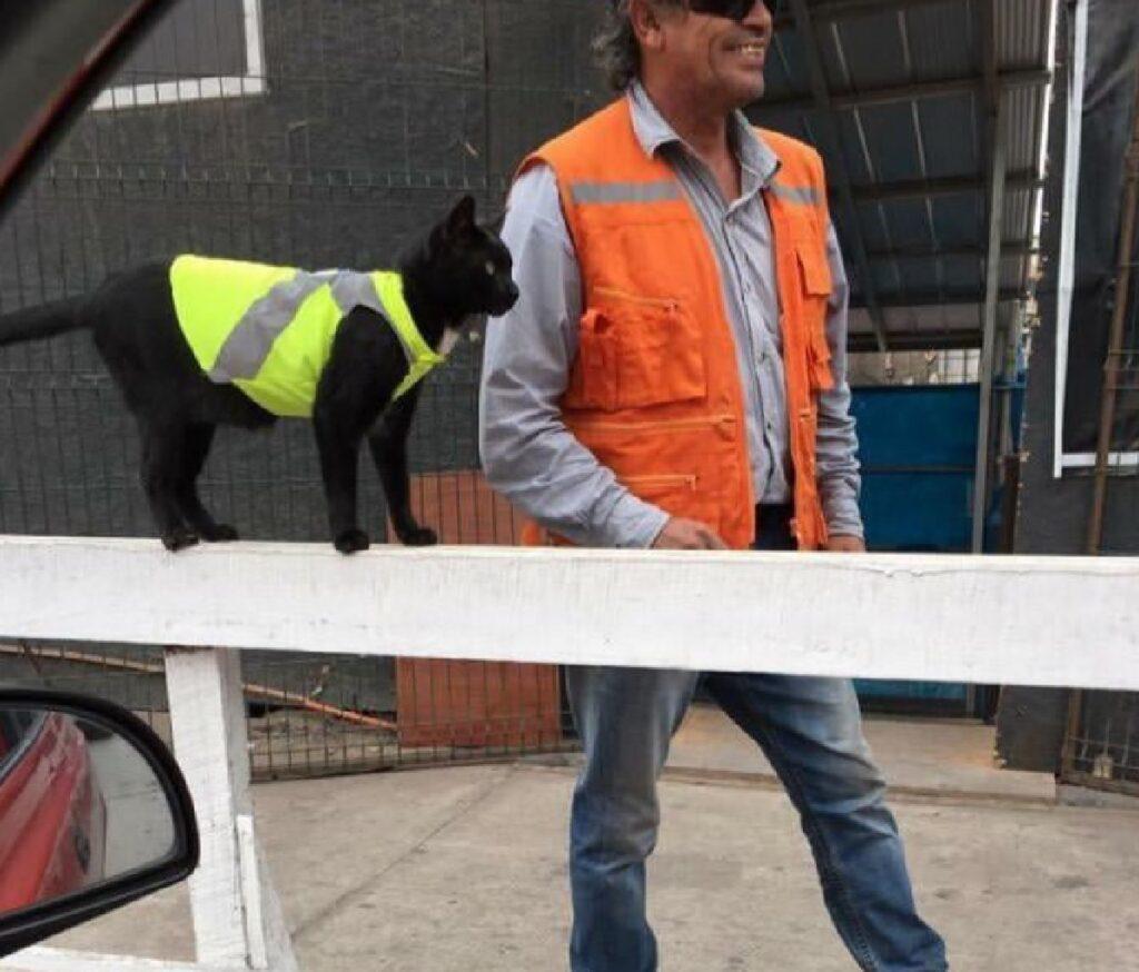 gatto lavora in cantiere