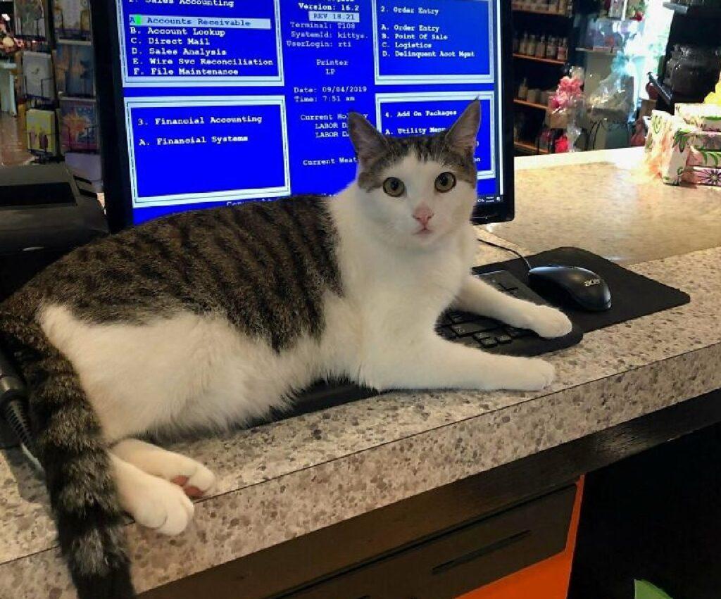 gattino sopra tastiera