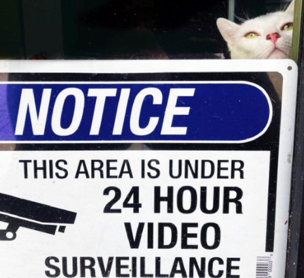 gatto sorveglianza cartello