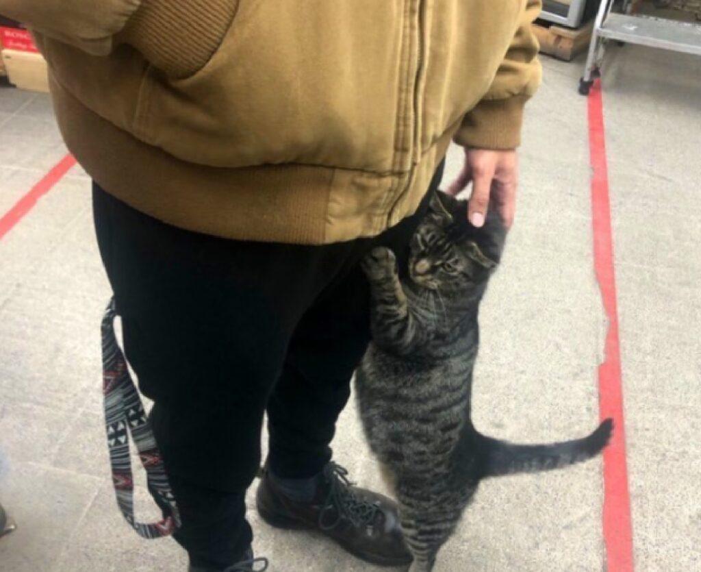 gatto aggrappato gambe cliente