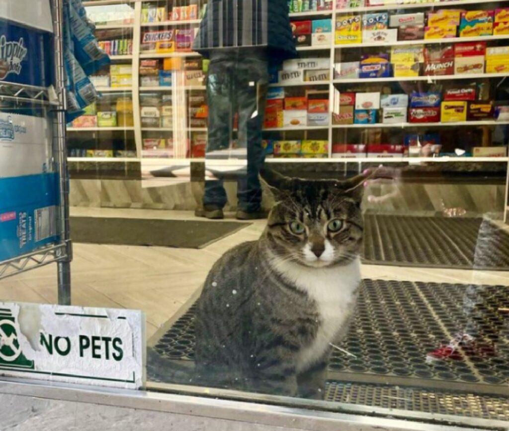 gattino contraddice avviso