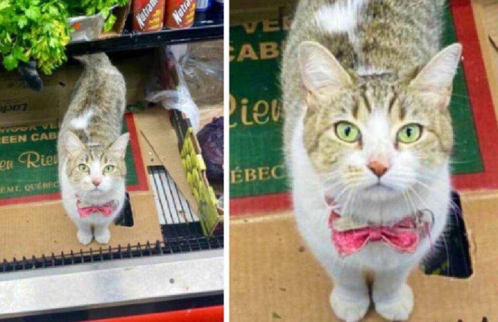 gatto accoglienza professionale