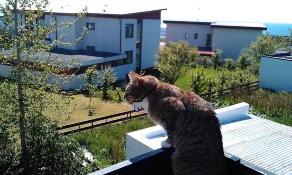 micio balcone guarda