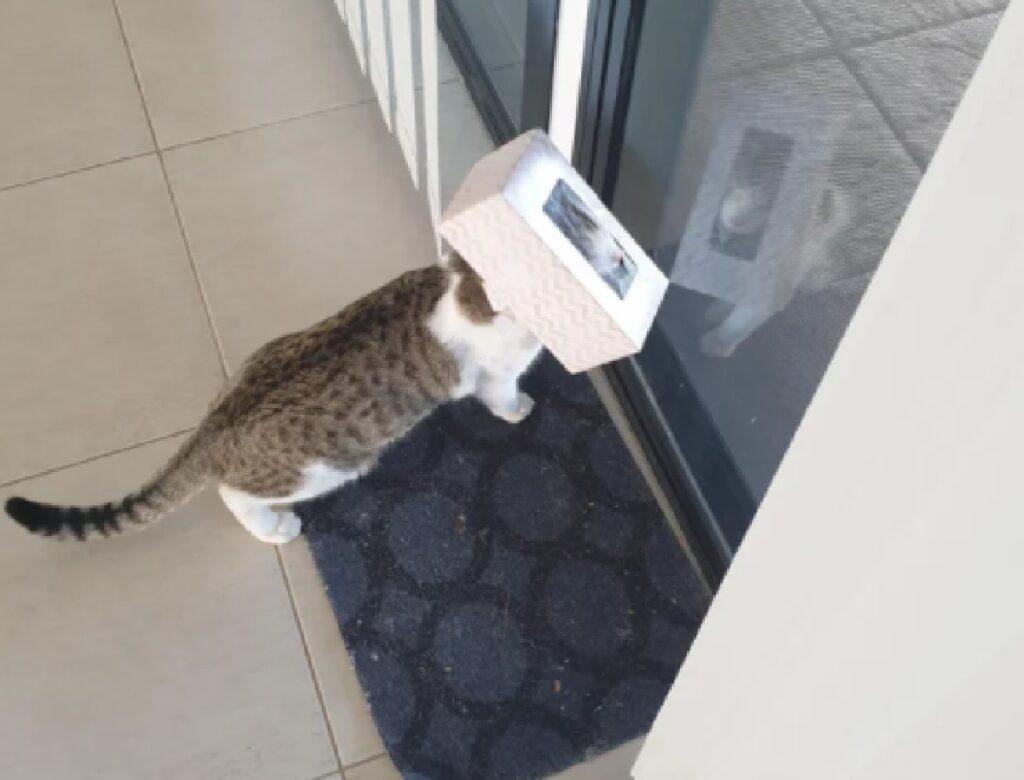 gatto ha bisogno di aiuto