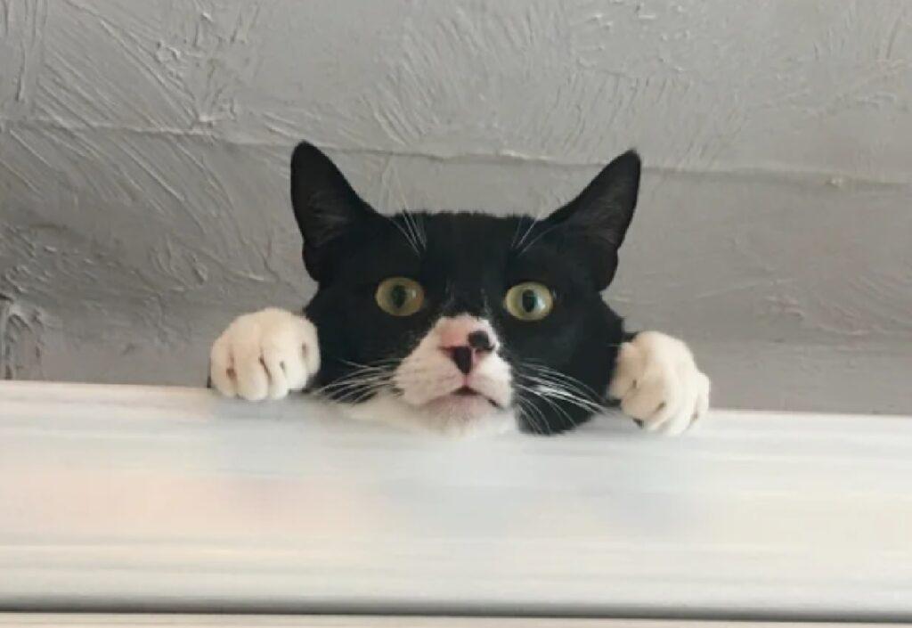 gatto si affaccia da finestra