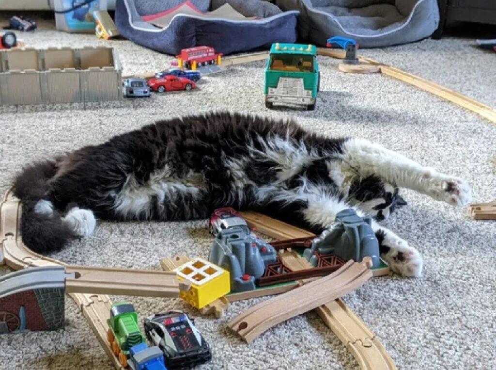 gatto ferma treno gioco