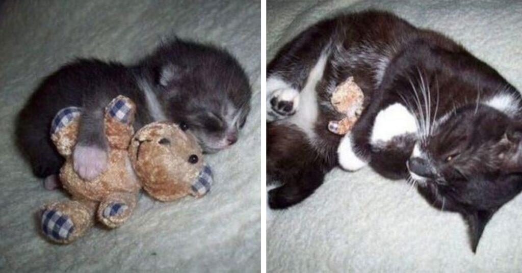 gatto inseparabile giochino