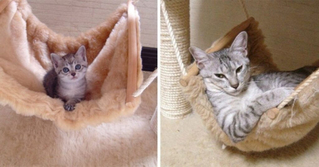 felino amaca piccolo