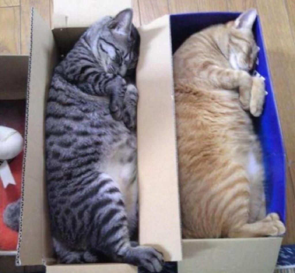 gatti messi in scatole