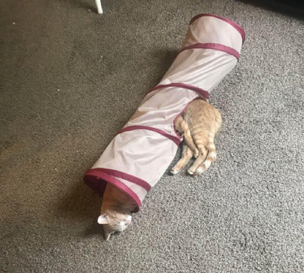 gatti dentro tubo tunnel