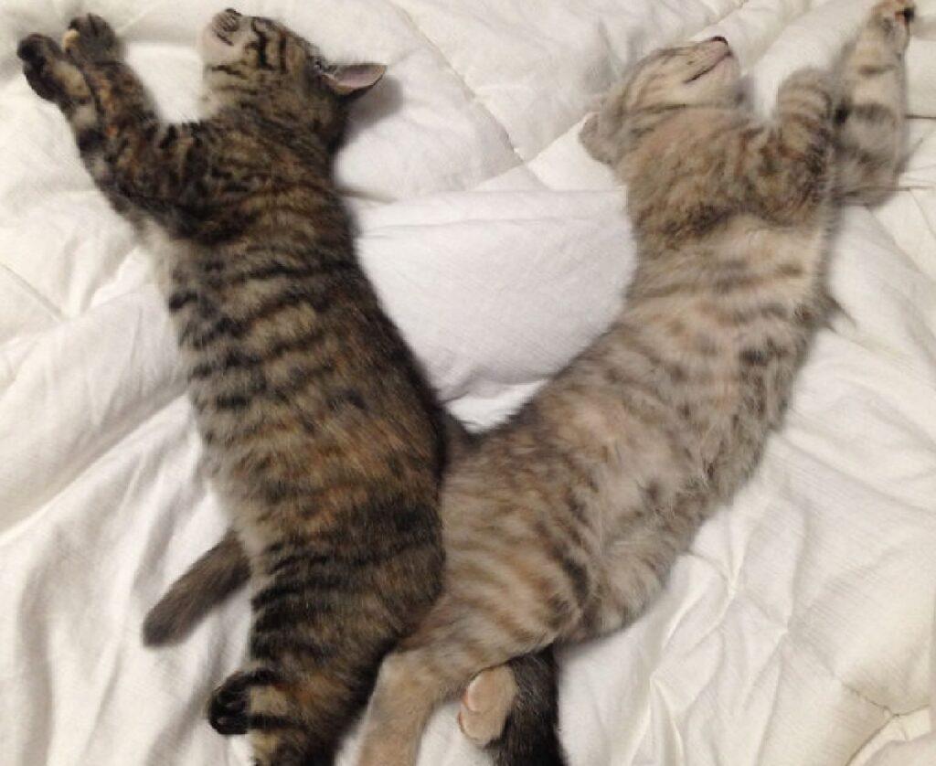 gatti sedere contro altro sedere