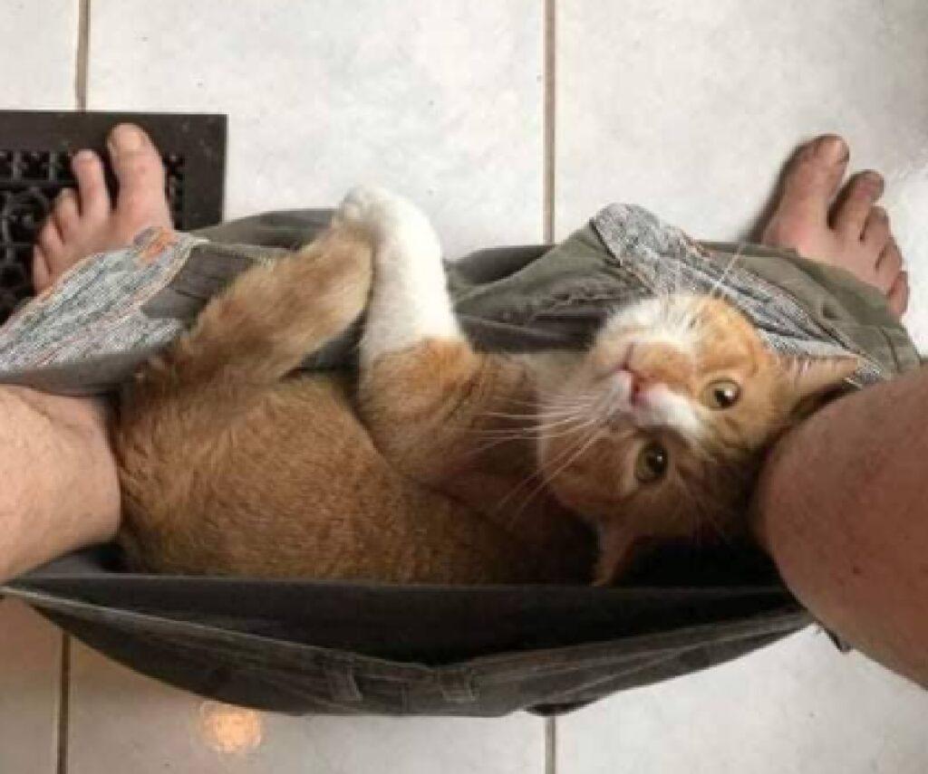 gatto rosso in mezzo pantaloni