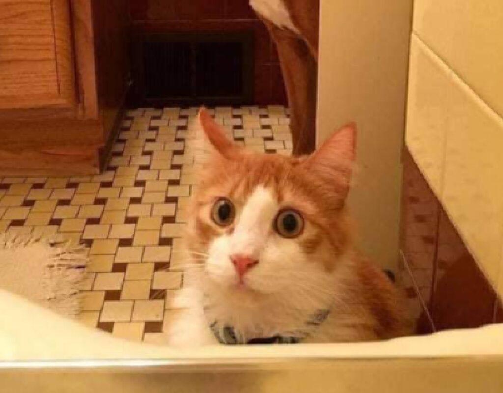 gatto vasca da bagno