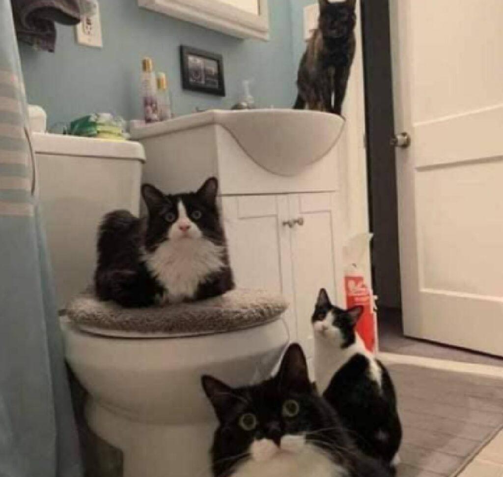 gatti in bagno che guardano