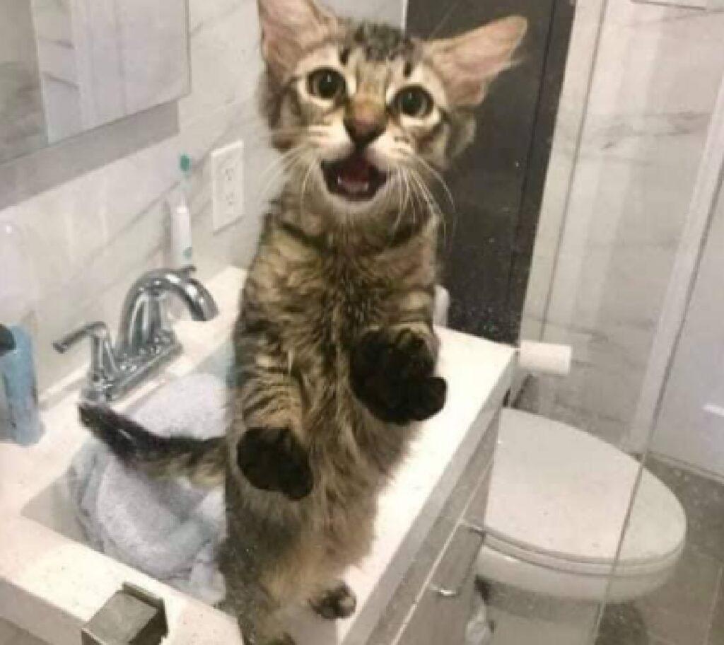 gatto grida fuori doccia