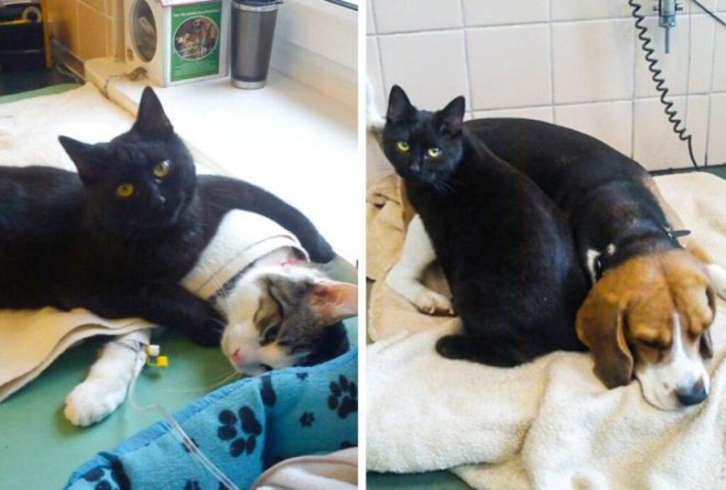 gatto nero aiuta