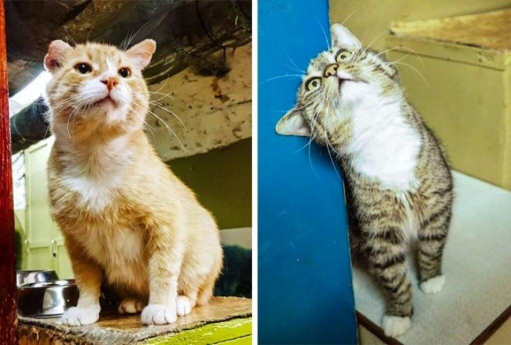 gatti guardie museo