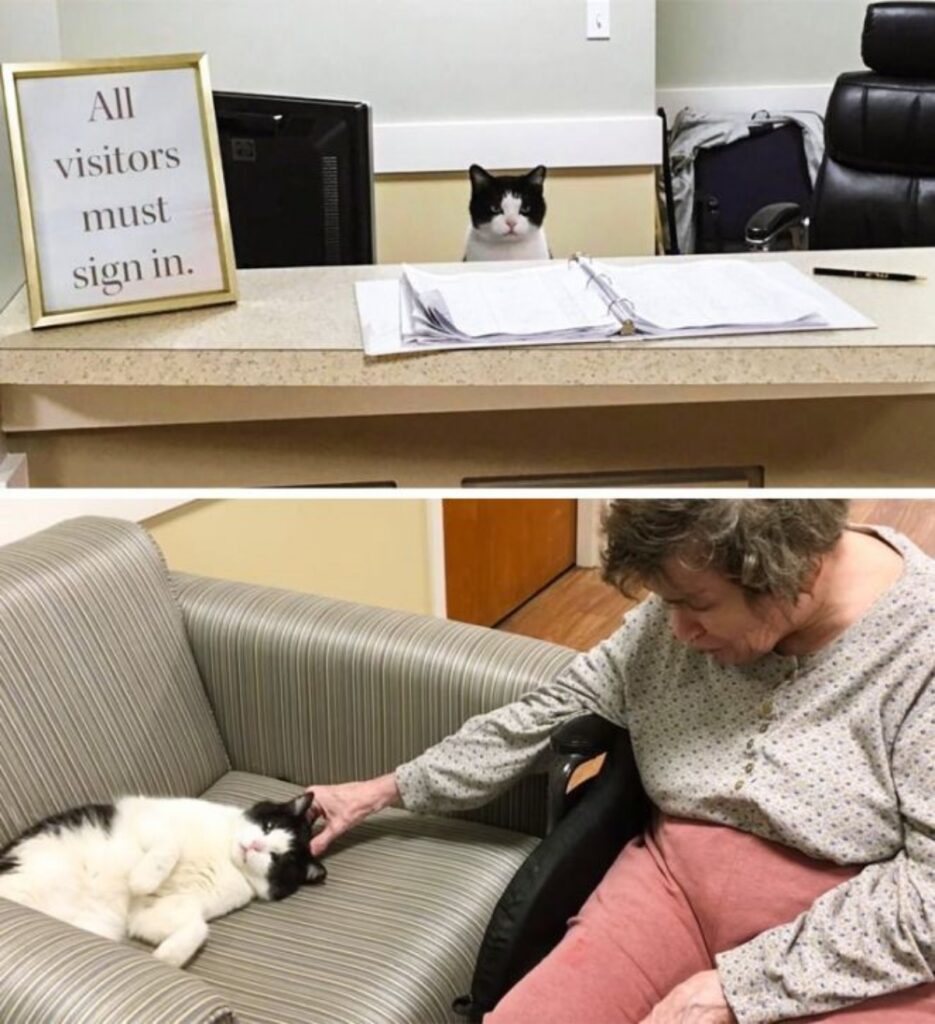 gattino anziana felice