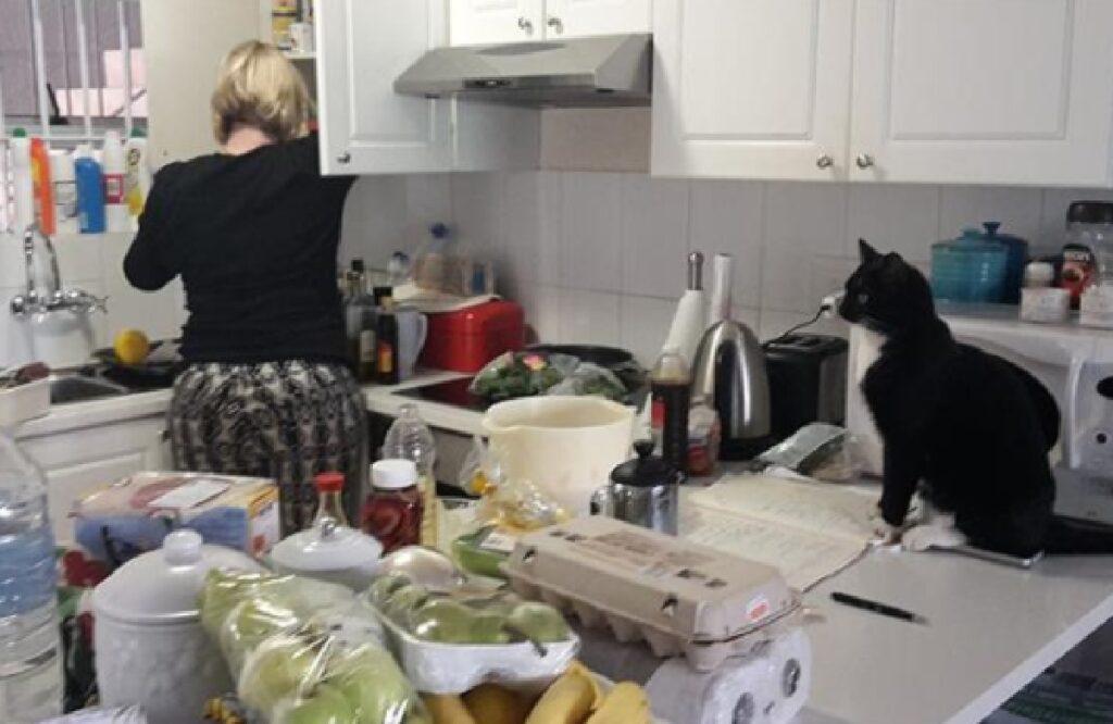 gatto bianco nero in cucina