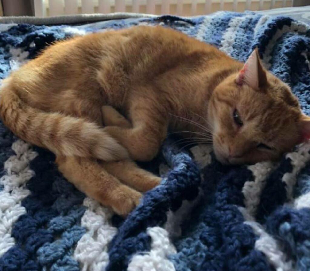 gatto dorme beatamente sul letto