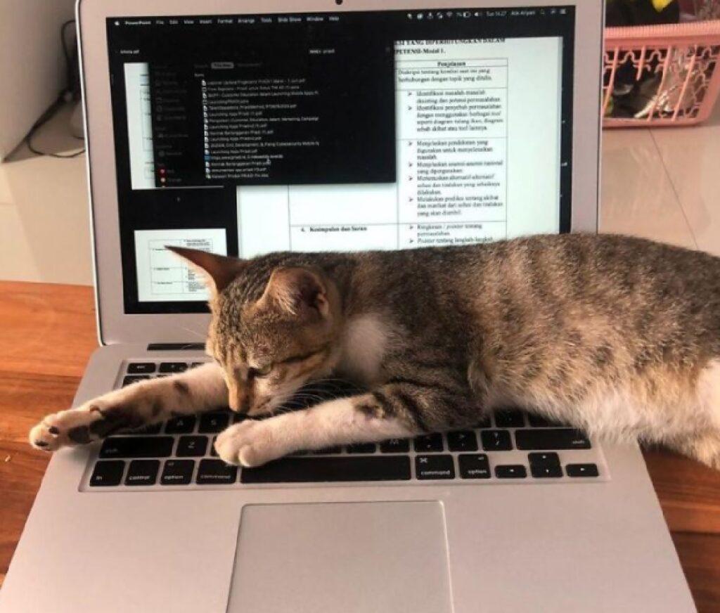 gatto sul laptop di ragazza