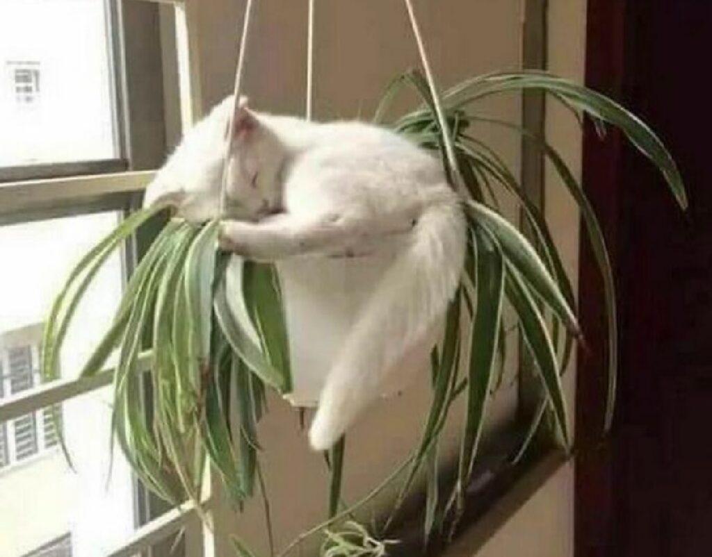 gatto dorme su pianta