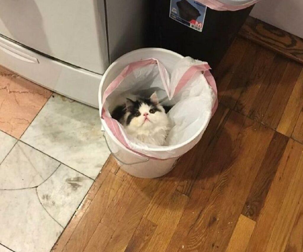 gatto dentro secchio