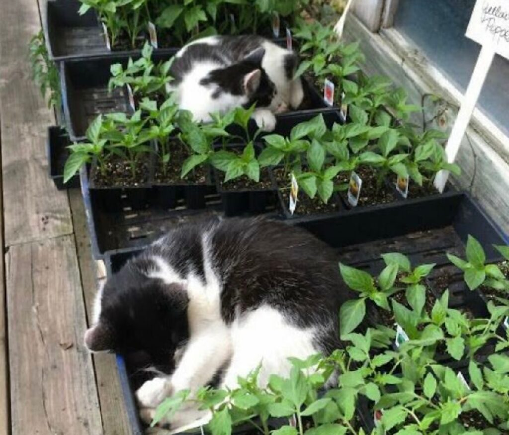 gatti in mezzo piante