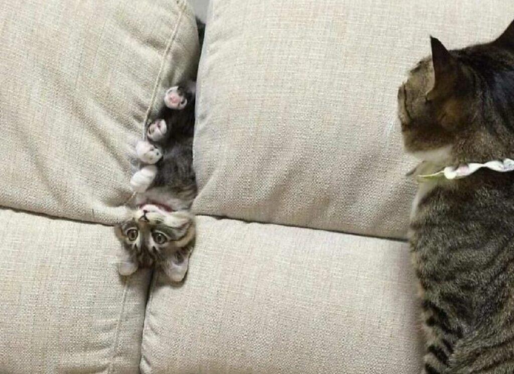 gatto dentro divano