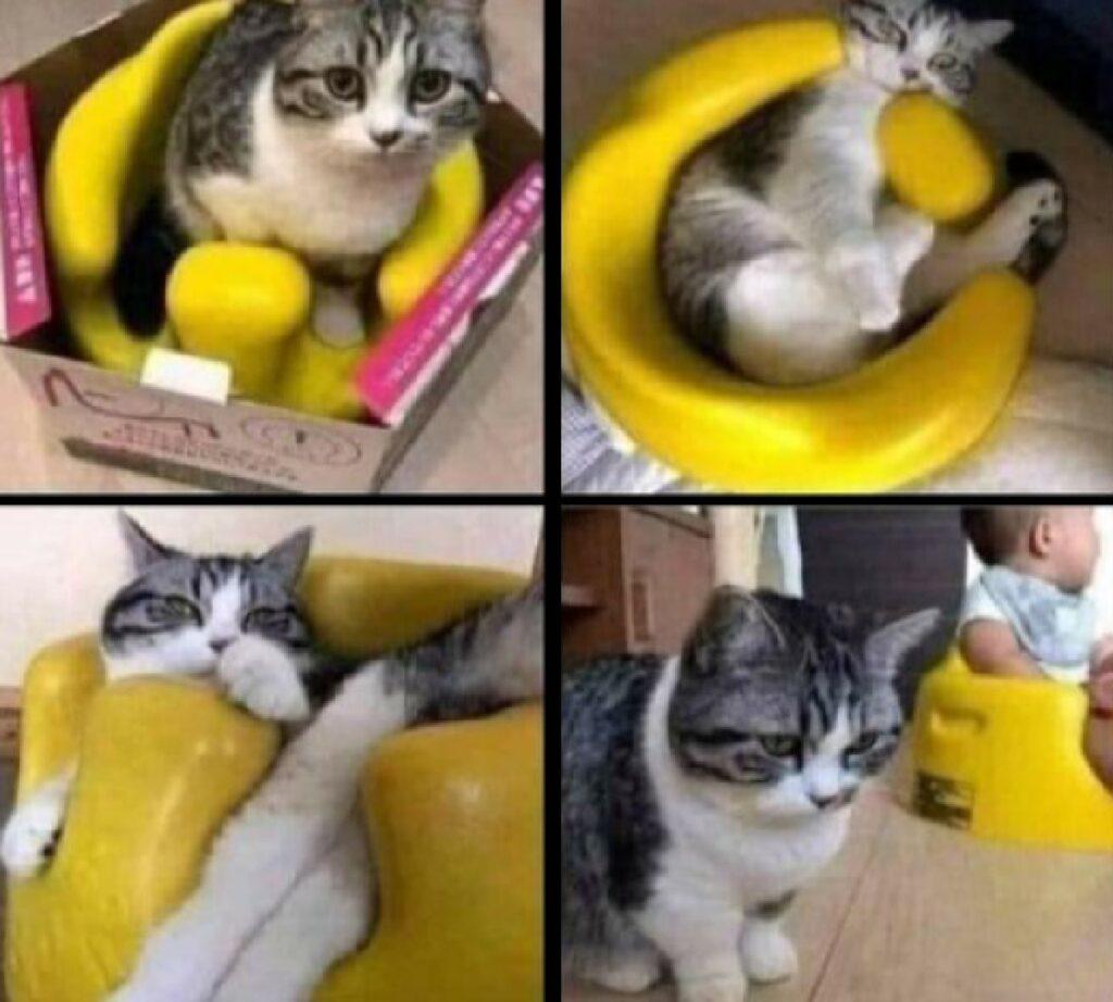 gattino dentro vasetto giallo