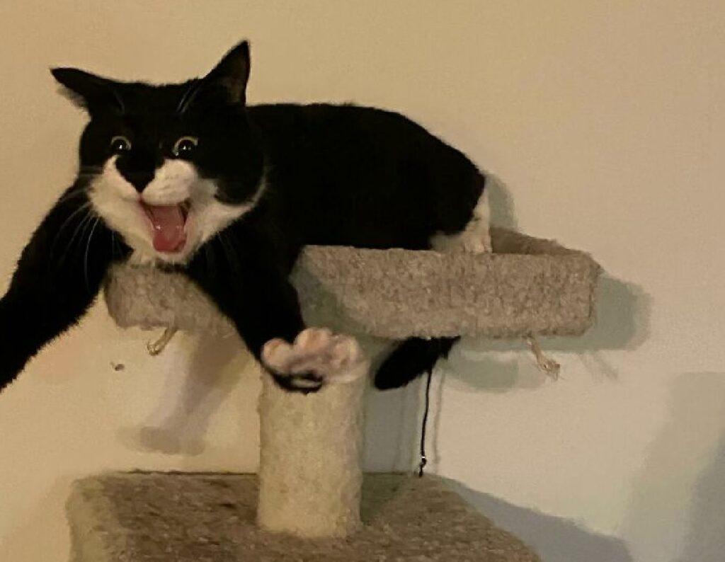 gatto bianco nero su albero felino